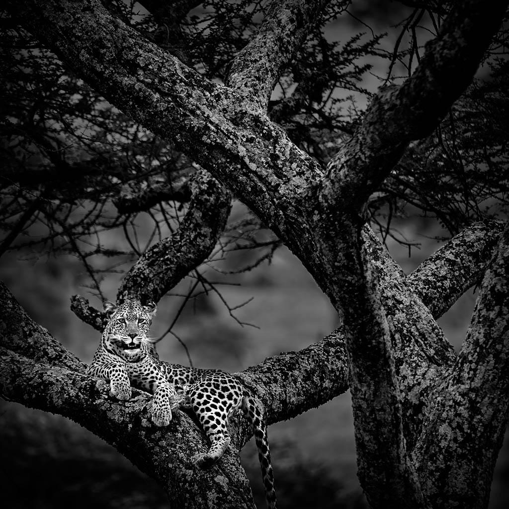 Mario Pereda, ganador de la categoría fauna y ganador global con la foto Desde la Atalaya, tomada en Parque Nacional Masai Mara el 13/10/2012