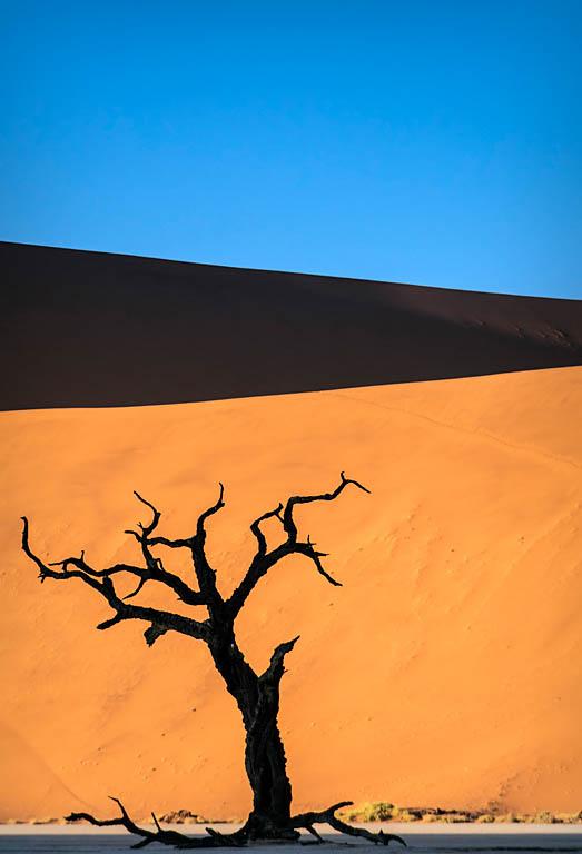 El Fotón 2015, Categoría Flora. Segundo Puesto. Mario Pereda. Namibia - Dead tree - Tomada en Deadvlei el 08/06/2015