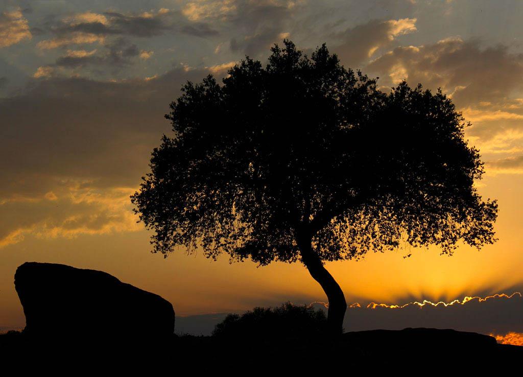 El Fotón 2015, Categoría Flora. Séptimo Puesto. Carolina Diaz Rodriguez. España - La encina y el ocaso - Tomada en Arroyo de la Luz el 21/06/2015