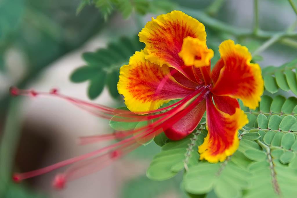 El Fotón 2015, Categoría Flora. Décimo Puesto.  Jerónimo Sánchez López. España - Pistilos - Tomada en Kerala el 09/06/15