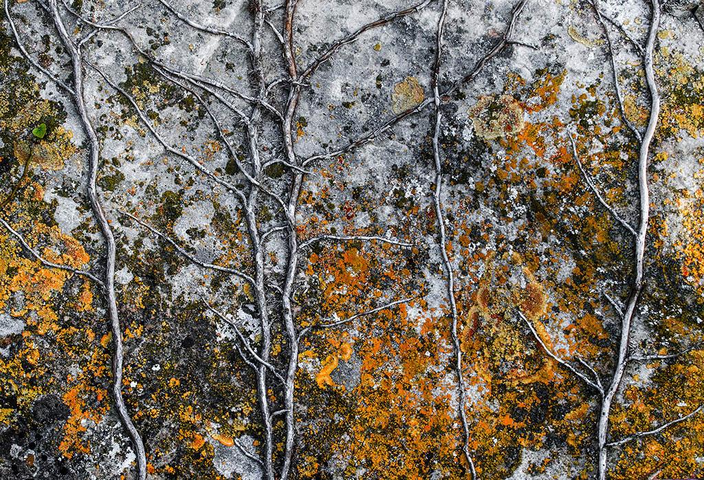 El Foton 2015. Creatividad Fotográfica. Octavo Puesto,  Gonzalo Díez Renobales . A forest - Tomada en Fuenmayor, La Rioja el 14/04/2014